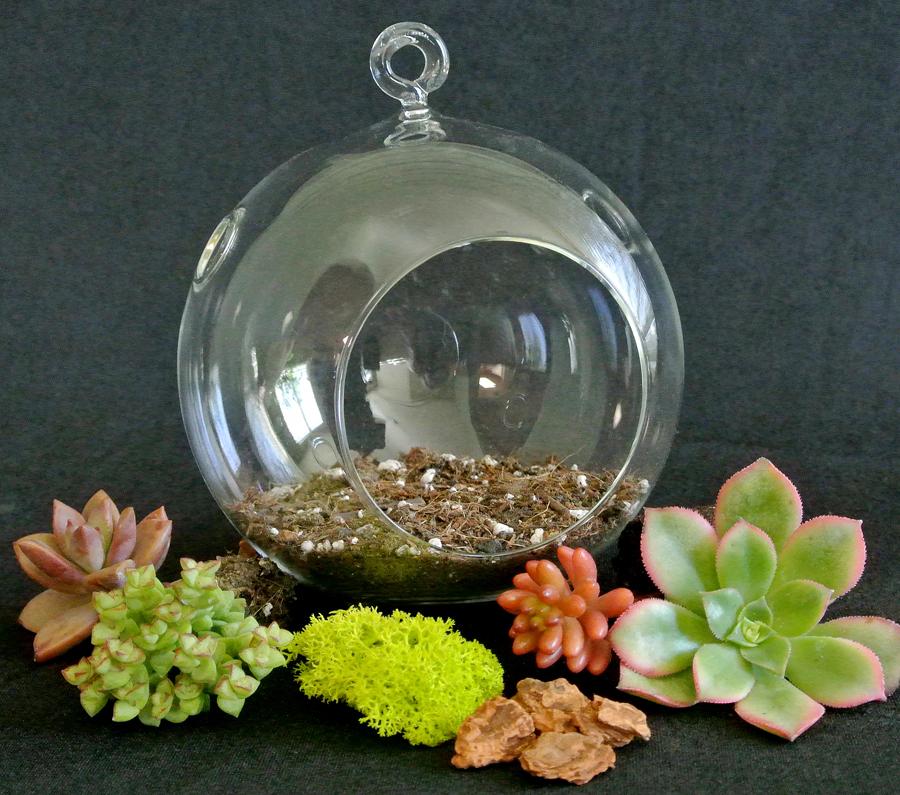 succulent terrarium ball hanging glass ball terrariums simply succulents. Black Bedroom Furniture Sets. Home Design Ideas