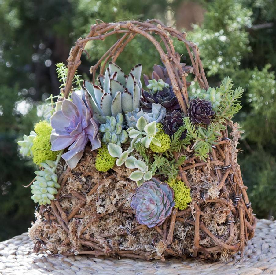 grapevine topiary purse simply succulents. Black Bedroom Furniture Sets. Home Design Ideas