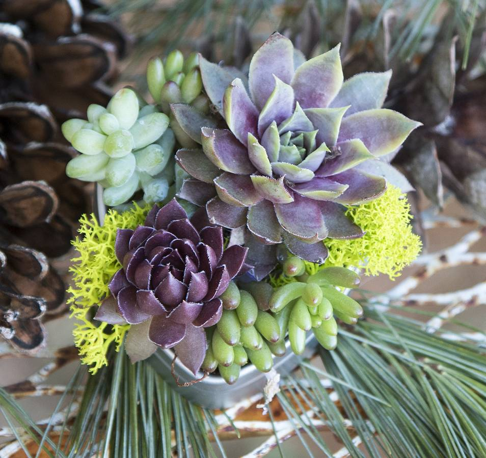 Succulents for Weddings   Wedding Favors, Bouquets & Centerpieces