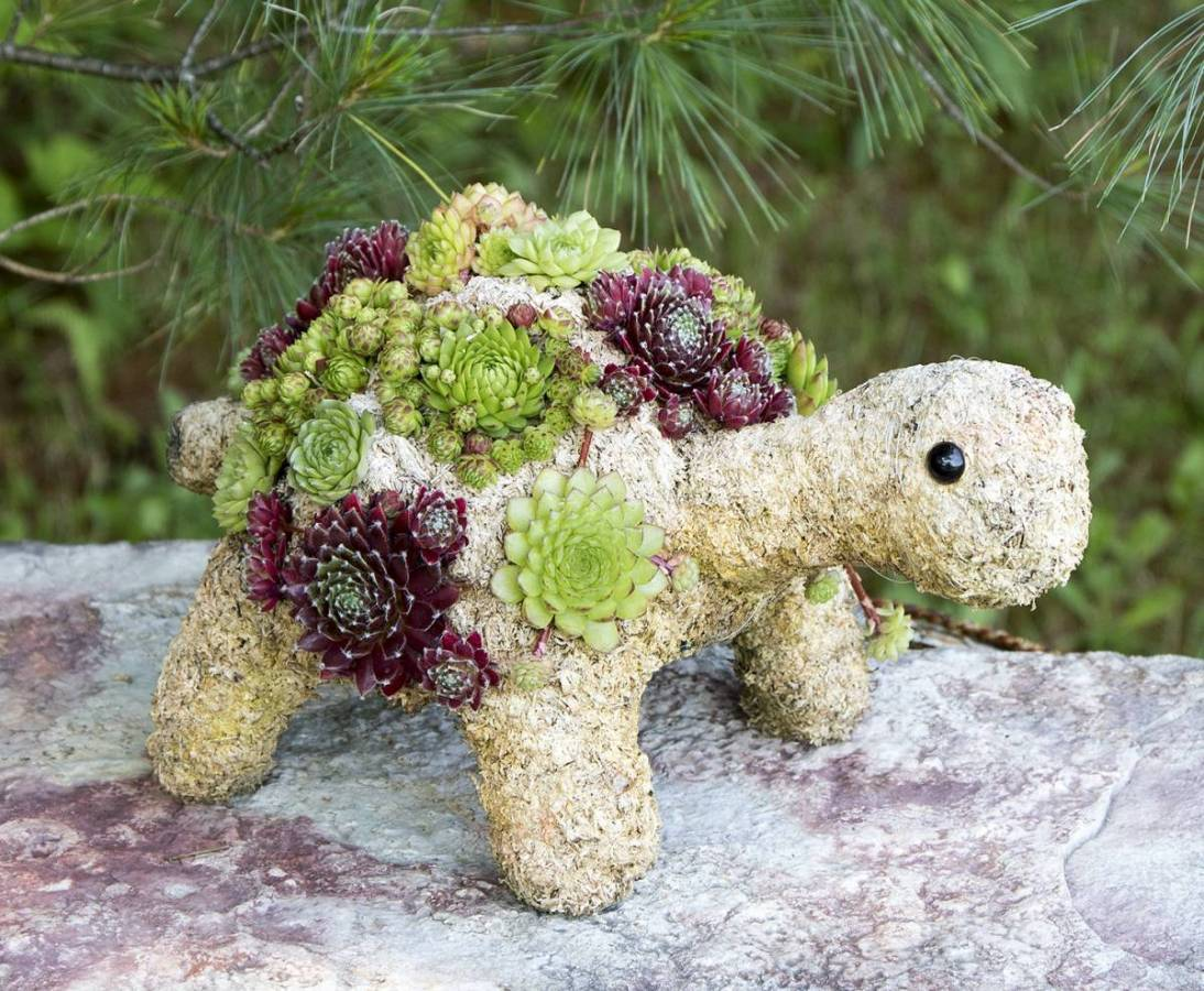 Succulent Topiaries | Shop for Living Wreaths & DIY Topiary Kits